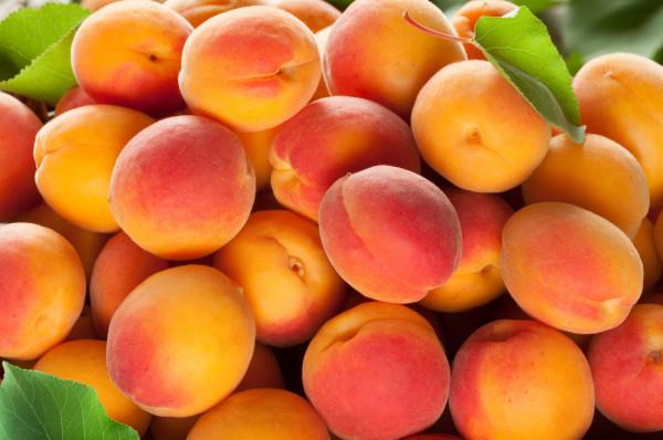 Abricots colorado