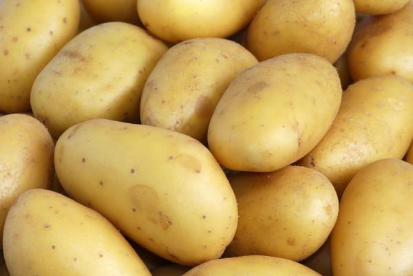 Pomme de terre Charlotte ( lavée,ferme)