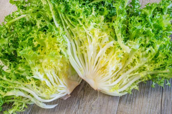 Salade Chicorée / Frisée de la ferme