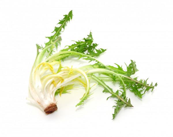 Salade Pissenlit blanc