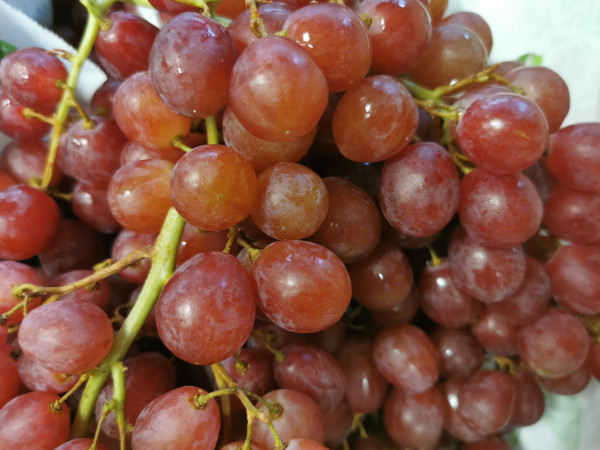 raisin rosé sans pépins